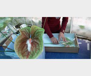 f_300_250_15592941_00_images_f.jpeg